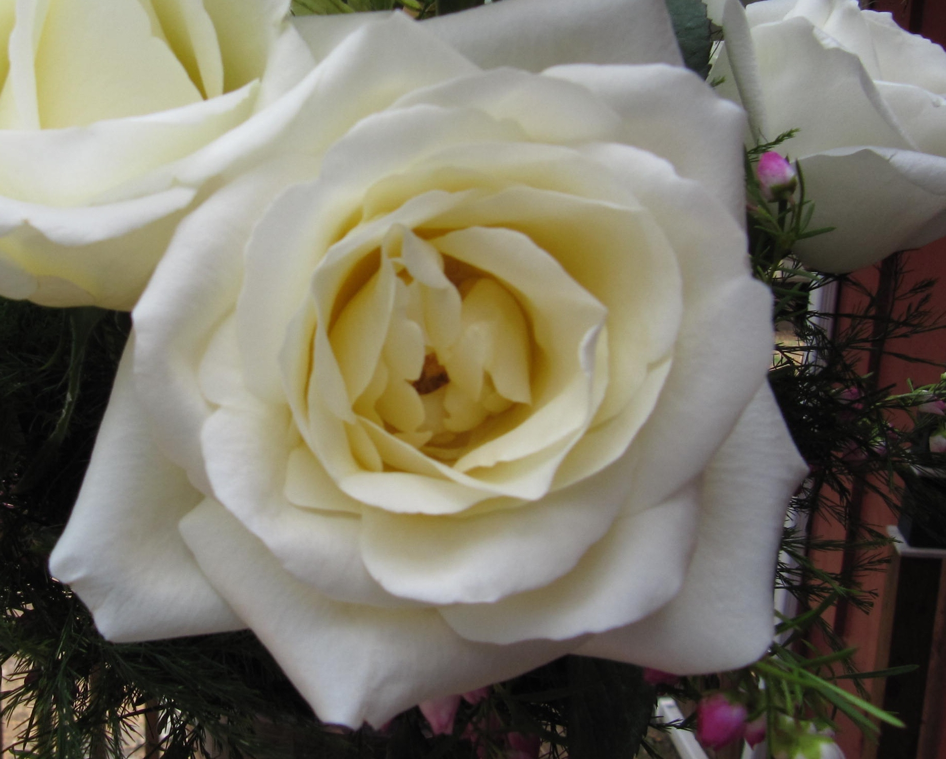 Types Of White Flowers With Names